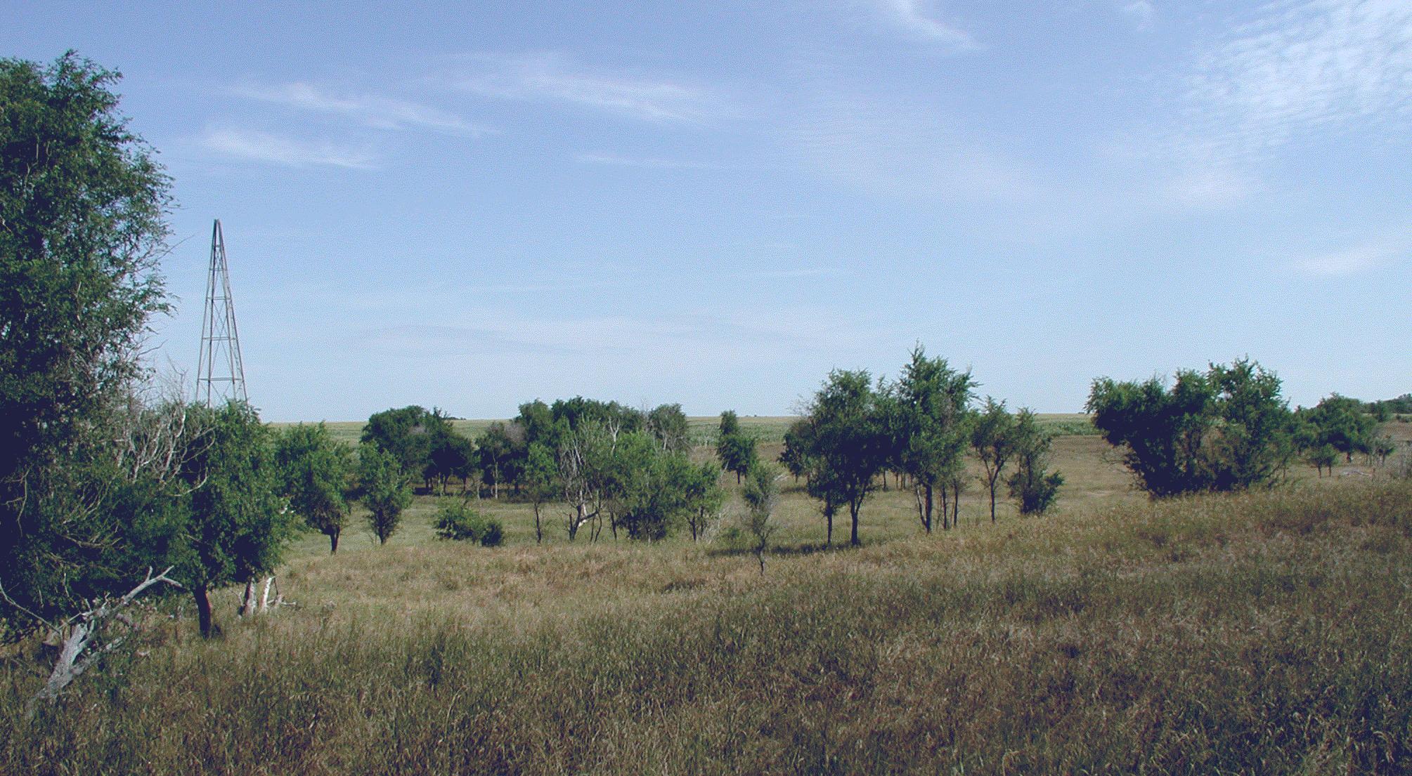 Lone Spruce.NET